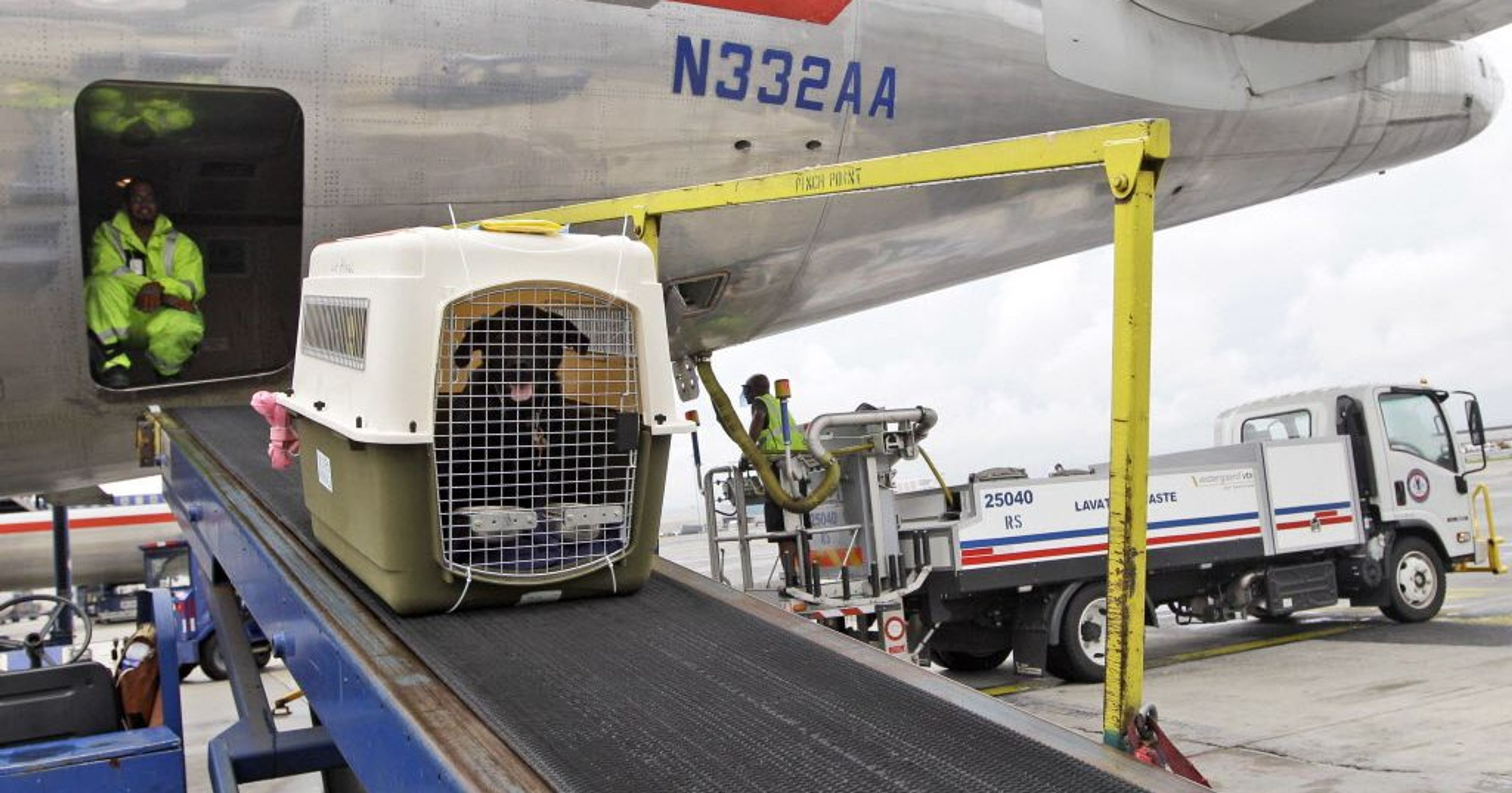 Easy Guide to Shipping Pets with Air Freight