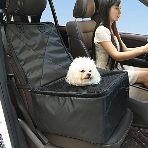 Pet Travel by Car