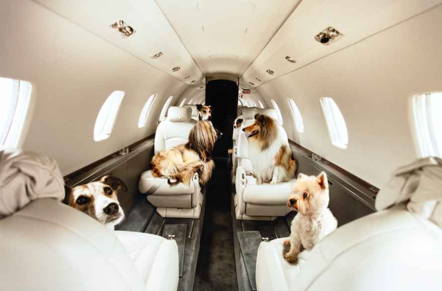 Pet Travel by Plane