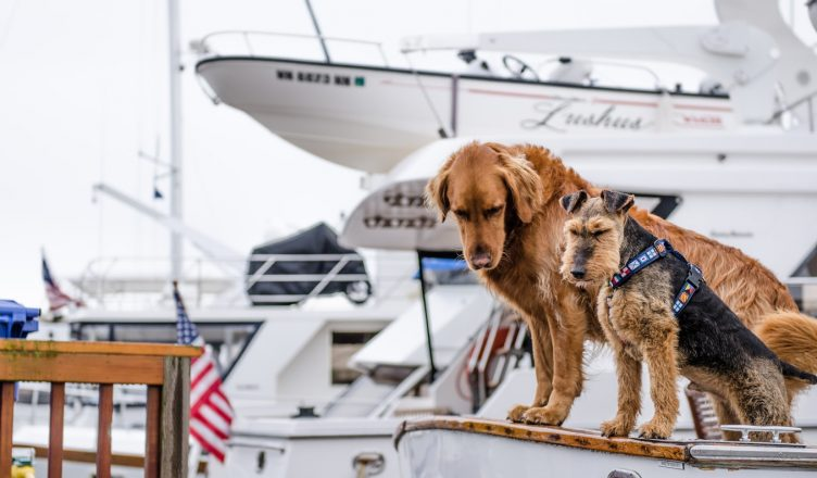 Pet Travel by Boat