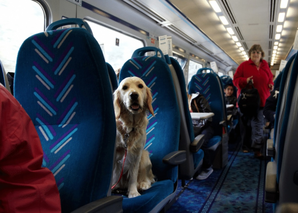 Pet Travel by Train